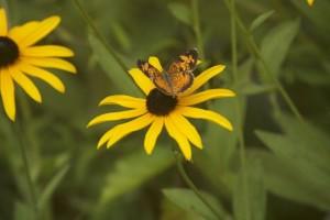 flower-walk-butterfly-2