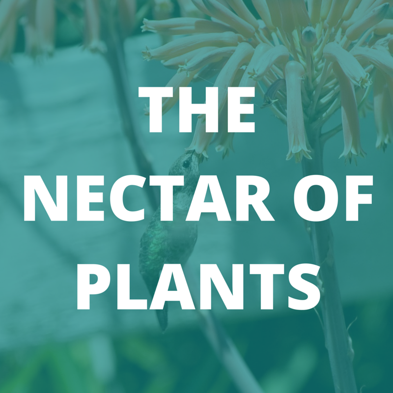 The Nectar of Plants